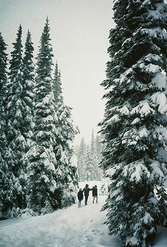 Midwinter Dream | A1 Pictures I Love Winter, Winter White, Winter Walk, Winter Green, Winter Hiking, I Love Snow, Winter Is Coming, Winter Snow, Winter Christmas