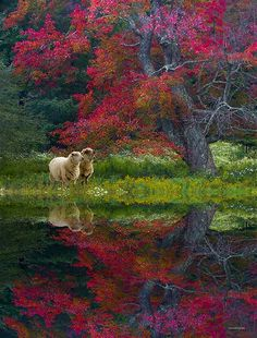 Colorful autumn reflection w/ sheep Foto Nature, All Nature, Green Nature, Beautiful World, Beautiful Places, Tier Fotos, Jolie Photo, Beautiful Landscapes, Autumn Leaves