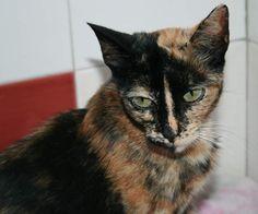 GAELA - Gato adoptado - AsoKa el Grande