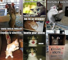 pinterest humor   ... Check out the Cat Humor board for your daily fix of captioned cats