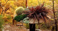 Terrassen » Pflanzen In Töpfen Und Kübeln Verschönern Die Terrasse #kubeln # Pflanzen #terrasse