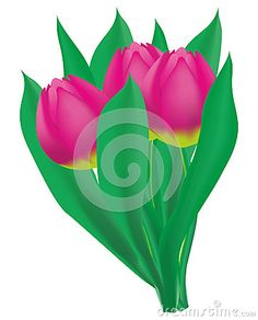 Bouquet of three Pink Tulip with leaves on white background