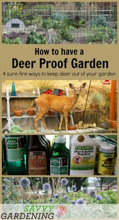proof gardens: 4 sure-fire ways to keep deer out of your garden Four useful and practical tactics to lead you toward a deer proof garden.Four useful and practical tactics to lead you toward a deer proof garden.