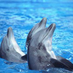 3. dauphins / delphins http://selection.readersdigest.ca/animaux/faits-insolites/5-animaux-aux-talents-etonnants