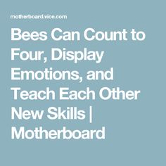 Bees Can Count to Four, Display Emotions, and Teach Each Other New Skills   Motherboard