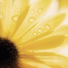 they call me mellow yellow . Sunflowers And Daisies, Yellow Flowers, Beautiful Flowers, Exotic Flowers, Wildflowers, Simply Beautiful, Colorful Roses, Shades Of Yellow, Colour Yellow