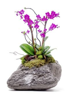 Mini #Orchids Stone Garden. This would work well as long as the orchid was attached to a real rock without a hidden pot. They are naturally epiphytic plants.