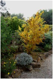 Jardín Mediterráneo: Mimosa y arbustos