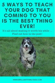 Dog training, new puppy, puppy training, dog recall training | 5 ways to teach your dog that coming to you is the best thing ever via @KaufmannsPuppy