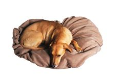 Dog Pillow brown/ Hundekissen Braun  http://www.adampillows.de/collections/dog-s/products/copy-of-checked