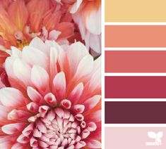 Dahlia Brights from Design Seeds. Gorgeous scrapbook layout palette for a girl, or a glittered floral card. Colour Pallette, Color Palate, Colour Schemes, Color Combos, Color Patterns, Color Tones, Red Color, Design Seeds, Couleur Feng Shui