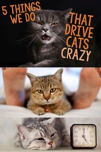 While cats often seem laid back like they just don't care, they do have a few pet peeves. There are some things we humans do that you may not realize are really frustrating to our felines. Are you guilty of any of these?
