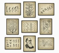 Evolution Wall Art Print Set of 9 Biology Wall by QuantumPrints