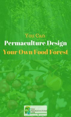 Today we're going to talk about a food forest, also sometimes known as a forest garden. It's a great way to produce and lot of food and minimize your workload.