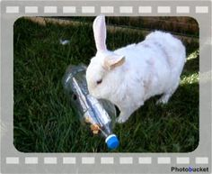 Even the cheapest things like an emty water bottle is great for your rabbit.