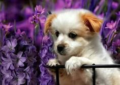 New Arrival Hot Sale Pet Cute Dog Pattern Diy Diamond Painting Kits Baby Animals, Cute Animals, Dog Pattern, Purple Flowers, Animals Beautiful, Puppy Love, Best Dogs, Cute Dogs, Awesome Dogs