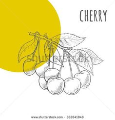 Cherry Illustration Stock Photos, Royalty-Free Images & Vectors ...
