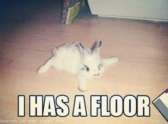 "I haz a floor! <a class=""pintag"" href=""/explore/rabbit/"" title=""#rabbit explore Pinterest"">#rabbit</a> <a class=""pintag"" href=""/explore/bunny/"" title=""#bunny explore Pinterest"">#bunny</a> <a class=""pintag"" href=""/explore/bunnies/"" title=""#bunnies explore Pinterest"">#bunnies</a> <a class=""pintag"" href=""/explore/pets/"" title=""#pets explore Pinterest"">#pets</a> <a class=""pintag searchlink"" data-query=""%23cuteanimals"" data-type=""hashtag"" href=""/search/?q=%23cuteanimals&rs=hashtag"" rel=""nofollow"" title=""#cuteanimals search Pinterest"">#cuteanimals</a>"