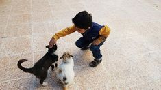 For his fifth birthday Kamal asked his father only one wish : To Visit the house of Cats. Children Of Syria, Syrian Children, One Wish, Kittens, Cats, Childhood, Father, Babies, Birthday