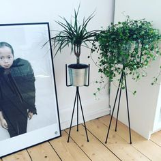 Our plant stands are available in two sizes and perfect for every room in your home. http://www.fermliving.com/webshop/shop.aspx?eComSearch=True&ID=14&eComQuery=Plant+Stand