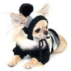 """针织:""""有趣的宠物服装"""" - maomao - 我随心动"""