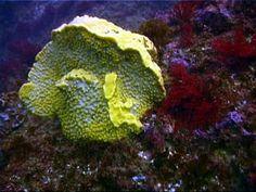 Sponge