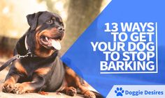 Want to learn how to get your dog to stop barking? Is he annoying not only you but your guests and neighbors? Here's how to get your dog to stop barking.