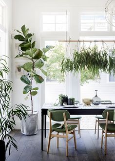 Surround yourself with greenery in a nature -inspired dining room - Home Beautiful