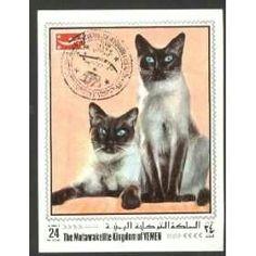 Siamede Cats