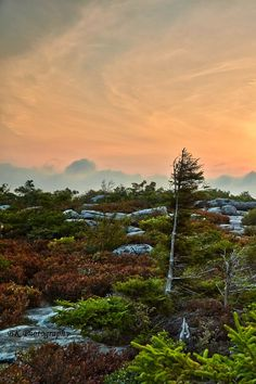 Dawn at Bear Rocks / Dolly Sods Wilderness Area / 10 September, 2013 / by BK Photography