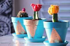 Copper leafed containers, pots, planters, turquoise, moon cactus, cacti, triangles, succulents