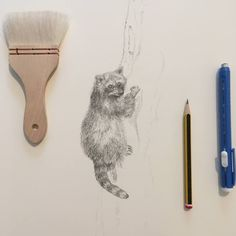 Sarah J. Loecker : How to draw a raccoon kit in a million tiny steps... Drawing Animals, Animal Drawings, Tiny Steps, Baby Raccoon, Yellowstone Park, Cartoons Love, Natural History, Picture Show, Cool Watches