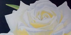 White Rose 2 - 100x50 cm Acrylic on stretched canvas