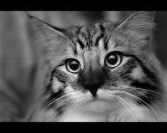 Baltard Feline Show 2010 - IV by darkcalypso on deviantART