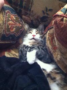 My cat is soooooo cute!!!! <3