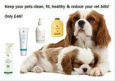Aloë vera producten ook voor je lieve huisdier :-)
