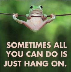 Hang in there frog life, funny animals, true quotes, best quotes, motivational Cute Quotes, Great Quotes, Funny Quotes, Funny Memes, Memes Humor, Fun Sayings, Humor Quotes, Positive Quotes, Motivational Quotes