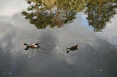 Narciso(s) ... sem narciso! // Chaves: rio Tâmega 2008 junho // Fto Olh 01 036 narciso(s) ... sem narciso  20080815