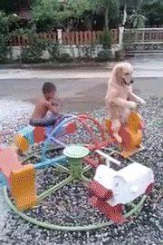This dog has better balance than I do!!! Haha!    #OhlandtVet
