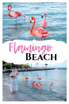 c8c175404fcb Flamingo Beach: The ultimate guide for visiting these beauties in Aruba