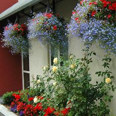 hanging baskets - Google Search