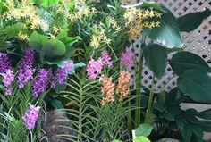 Orchids Garden of the East: Indoor and Outdoor Tropical Orchids Garden