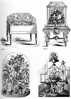 The Wardian case was the direct forerunner of the modern terrarium (and the inspiration for the glass aquarium), and was invented by Dr. Nathaniel Bagshaw Ward of London, in about Terrarium Containers, Terrarium Plants, Glass Terrarium, Paludarium, Vivarium, Modern Conservatory, Victorian Conservatory, Glass Aquarium, Victorian Era