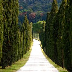 """""""There is something strange about these trees, it's like they know.  They know!  They know that we know that they know.  They are creepy, creepy Italian trees."""" ~ Under the Tuscan Sun"""