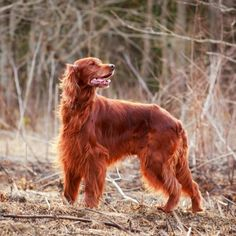 The 10 Best Dogs for Kids and Families | petMD