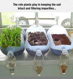 Groundwater science experiment shows importance of trees and other plants! Inspired by Earth Day, great for a HS Environmental Science class. Kid Science, Preschool Science, Middle School Science, Science Classroom, Science Lessons, Teaching Science, Science Ideas, Earth Science Activities, Science Nature