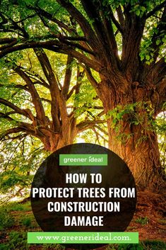 We should be worrying about the ecosystems in our backyard first. This is especially true when it comes to construction work. Among the many other things to be taken into account, like minimizing the noise impact and dust and debris removal, one of primary concerns should be related to trees at and around the building site. #tree #construction #environment #ecofriendly