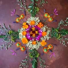 Medicine flower mandala ~ milky oats, elder, calendula, rue, California poppy, motherwort, echinacea, lavender and hibiscus, mullein and rose ~ Chestnut School of Herbal Medicine