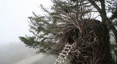 spirit nests - Google Search