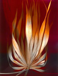 Stewart Nelson - scanography - scannography - ScanArt - Scanner Art